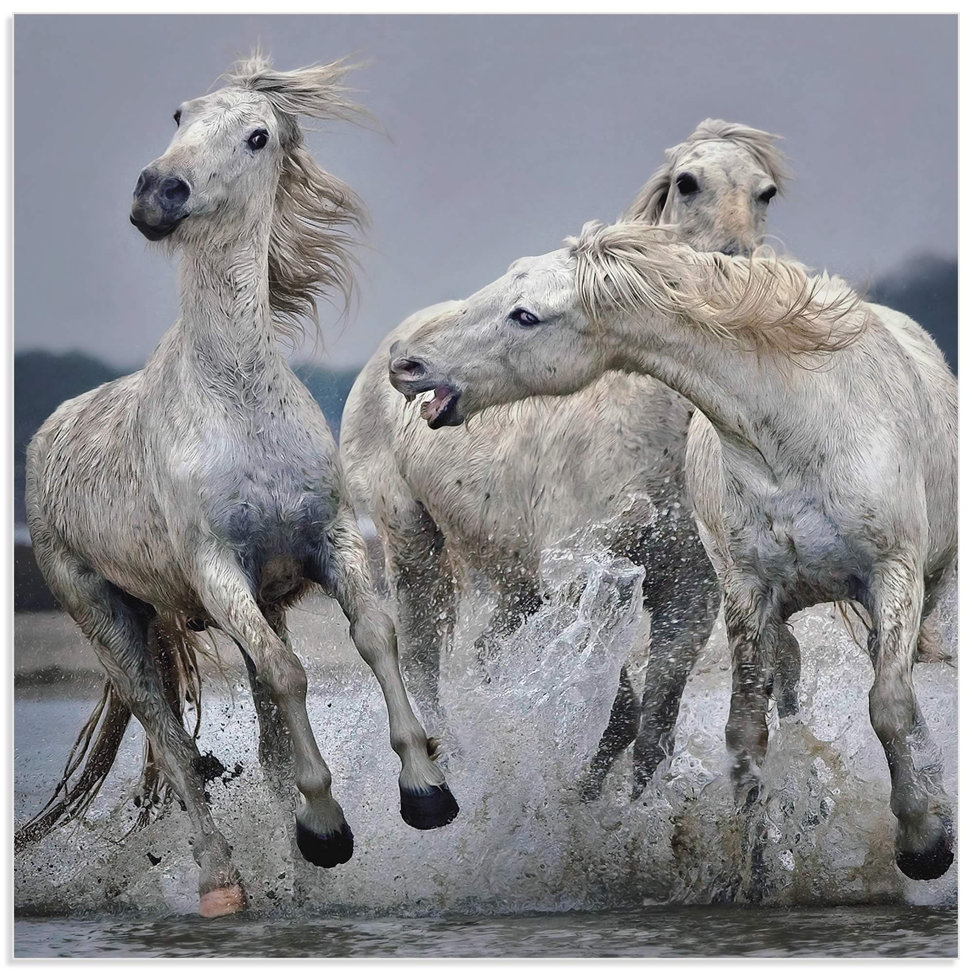 White Horse on Water by Paul Keates - Horse Art on Metal or Acrylic - Alternate View 2