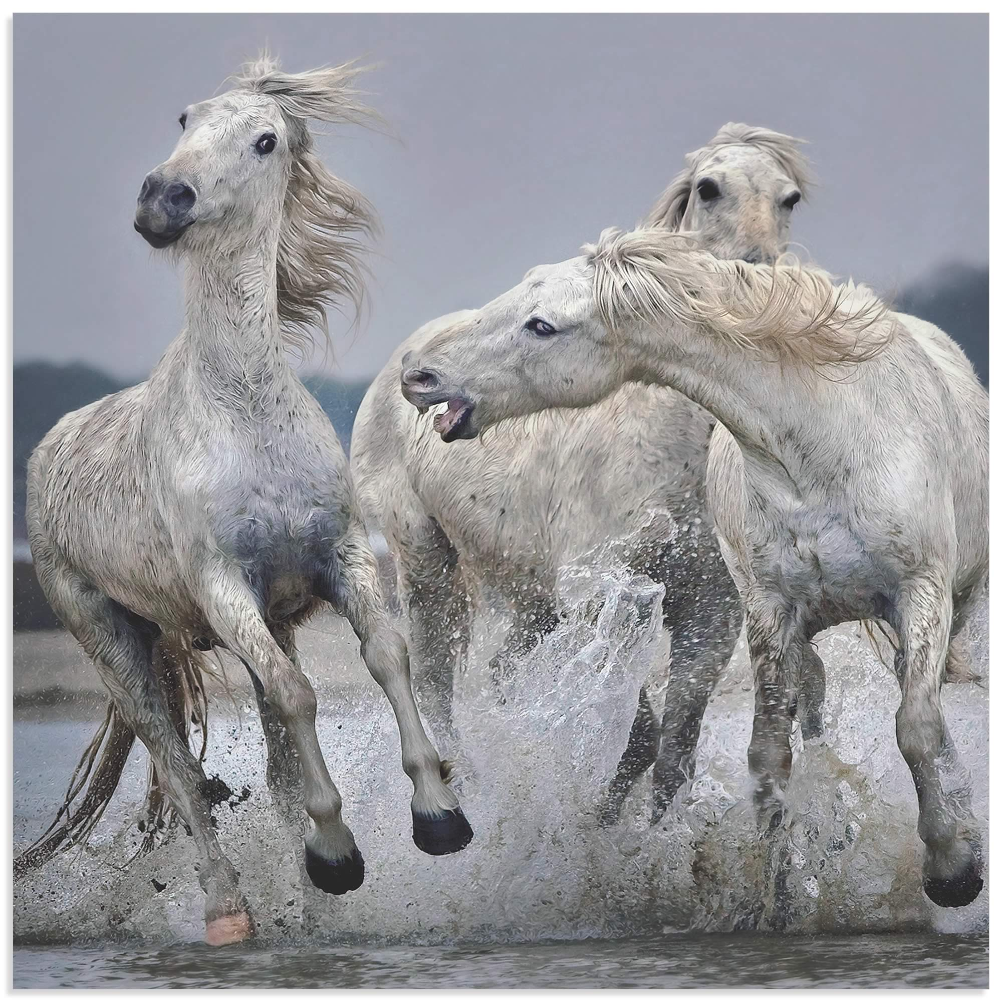 Metal Art Studio White Horse On Water By Paul Keates Horse Art On Metal Or Acrylic X1008978