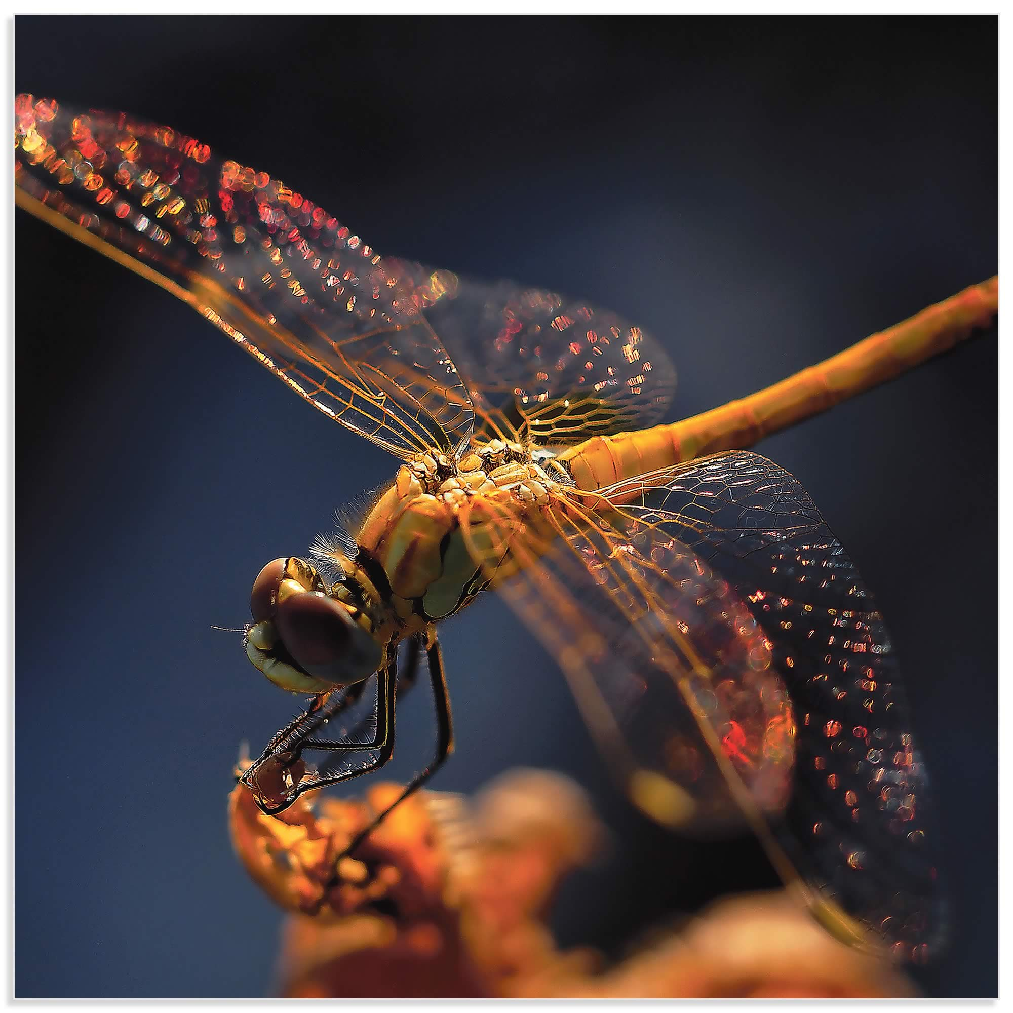 Golden Dragonfly by Thierry Dufour - Dragonfly Wall Art on Metal or Acrylic - Alternate View 2