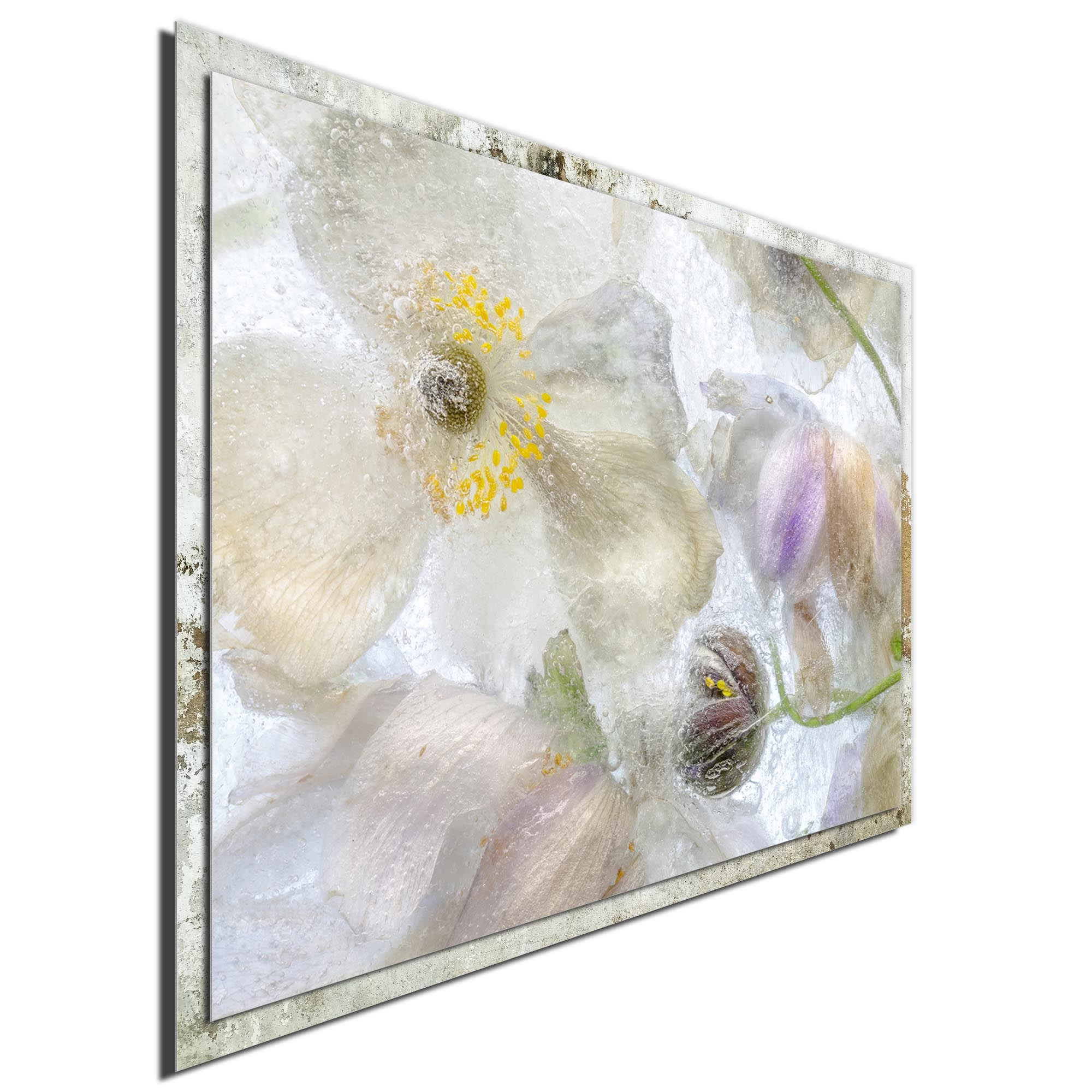 Anemone Frost by Mandy Disher - Modern Farmhouse Floral on Metal - Image 2