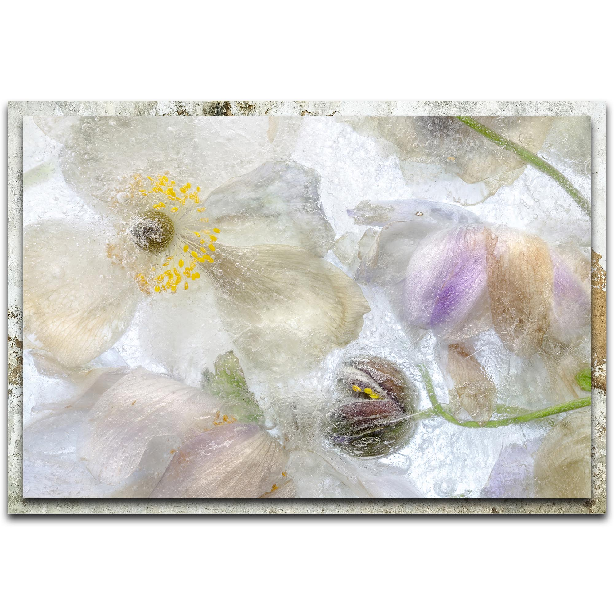 Mandy Disher 'Anemone Frost' 32in x 22in Modern Farmhouse Floral on Metal