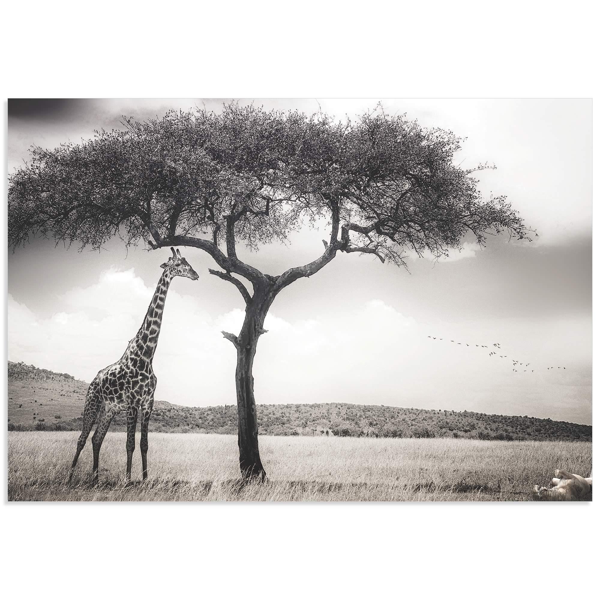 Under the African Sun by Piet Flour - Giraffe Wall Art on Metal or Acrylic