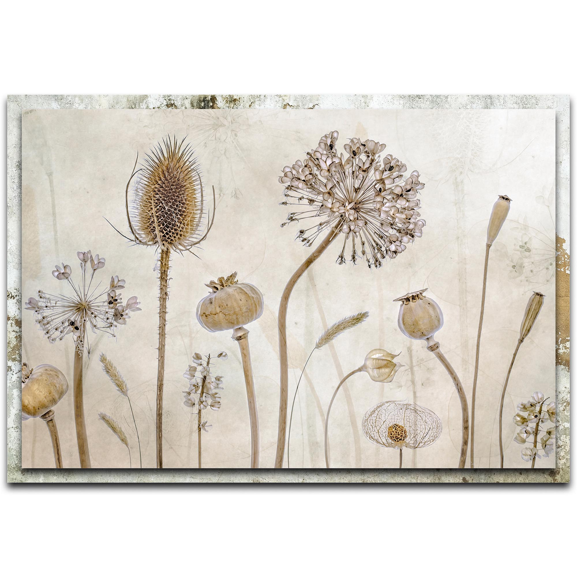 Mandy Disher 'Growing Old' 32in x 22in Modern Farmhouse Floral on Metal