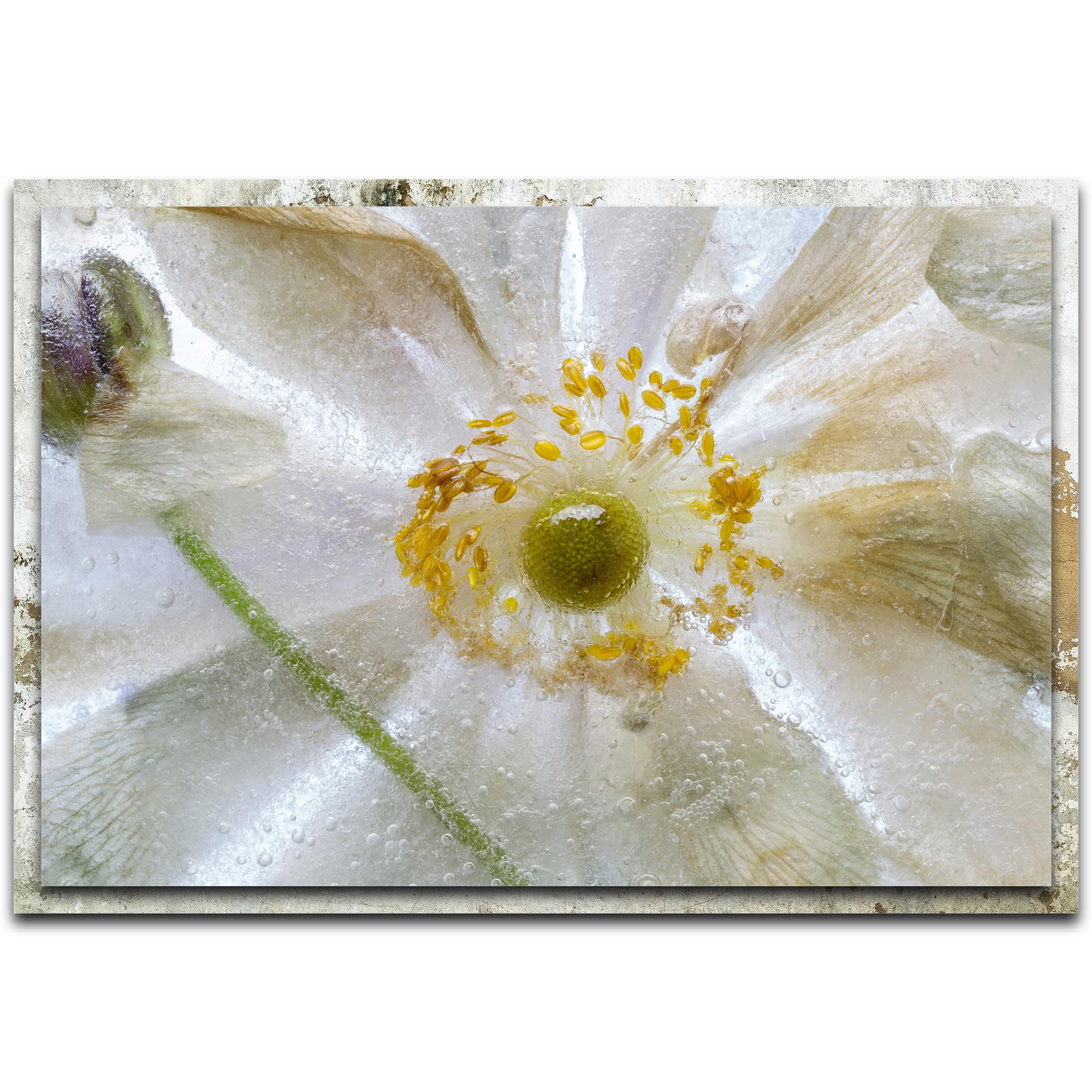 Mandy Disher 'Floral Freeze' 32in x 22in Modern Farmhouse Floral on Metal