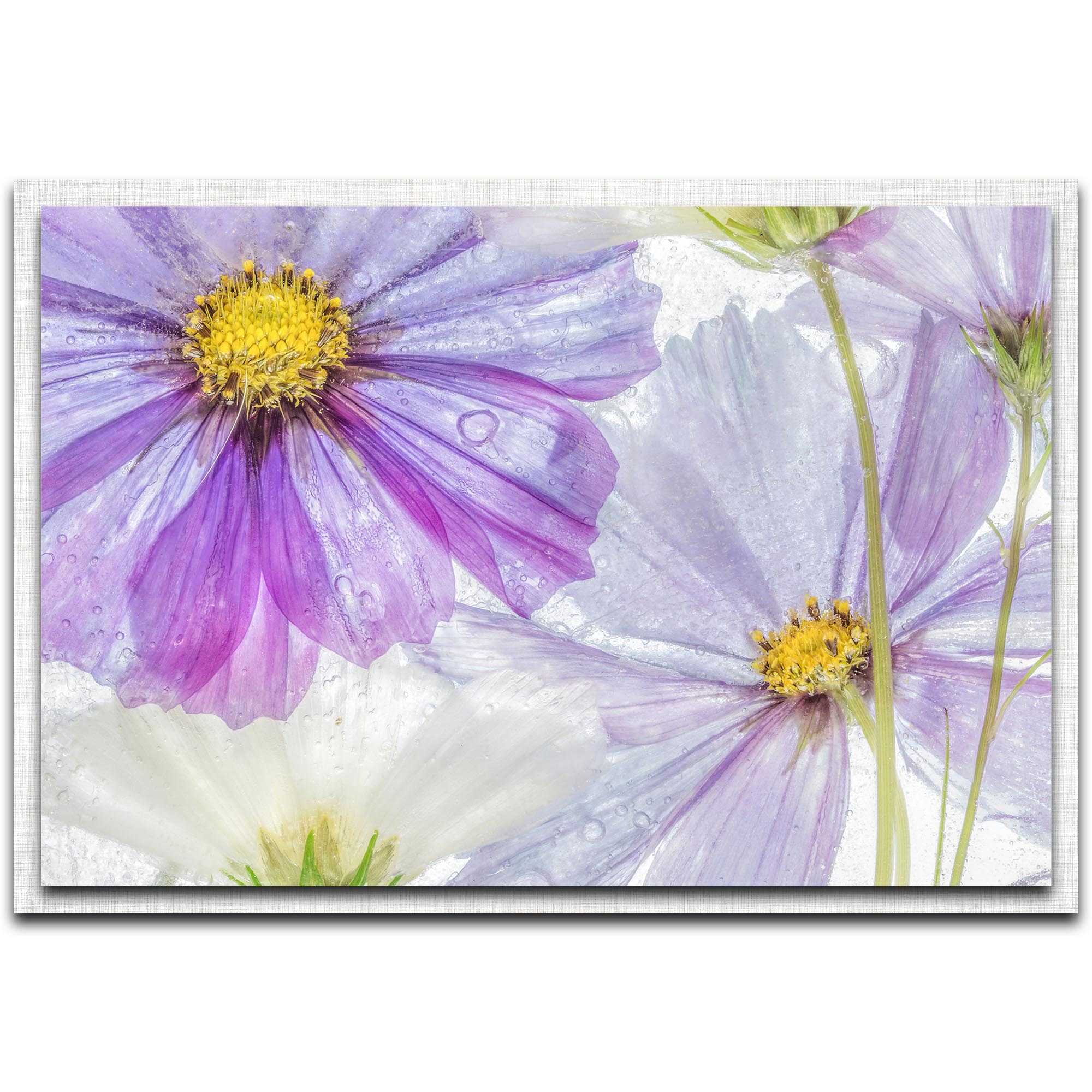 Mandy Disher 'Cosmos Cool' 32in x 22in Modern Farmhouse Floral on Metal