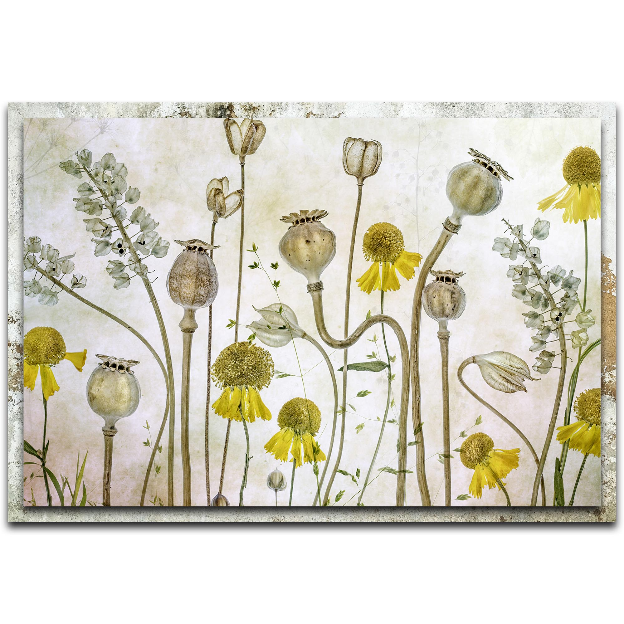 Mandy Disher 'Poppies and Helenium' 32in x 22in Modern Farmhouse Floral on Metal