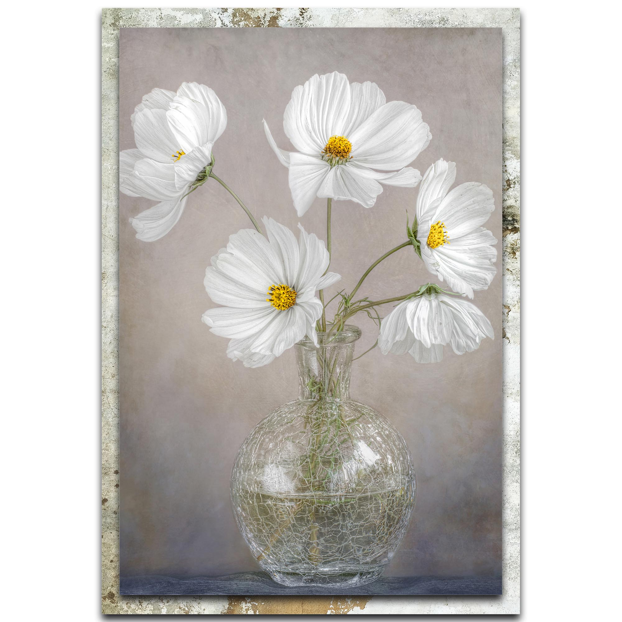 Mandy Disher 'Simply Cosmos' 22in x 32in Modern Farmhouse Floral on Metal