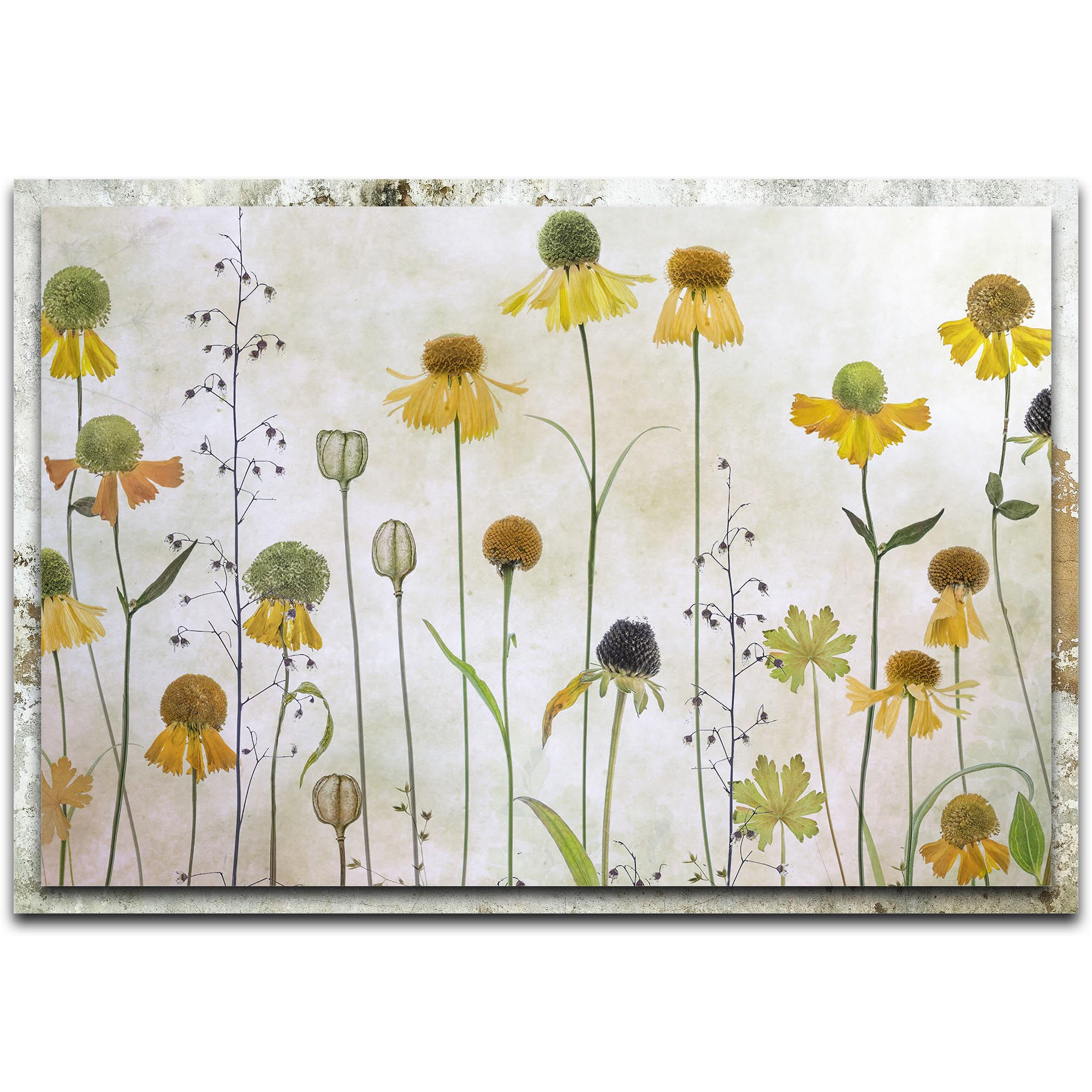 Metal Art Studio Helenium By Mandy Disher Modern Farmhouse Floral On Metal X1318955