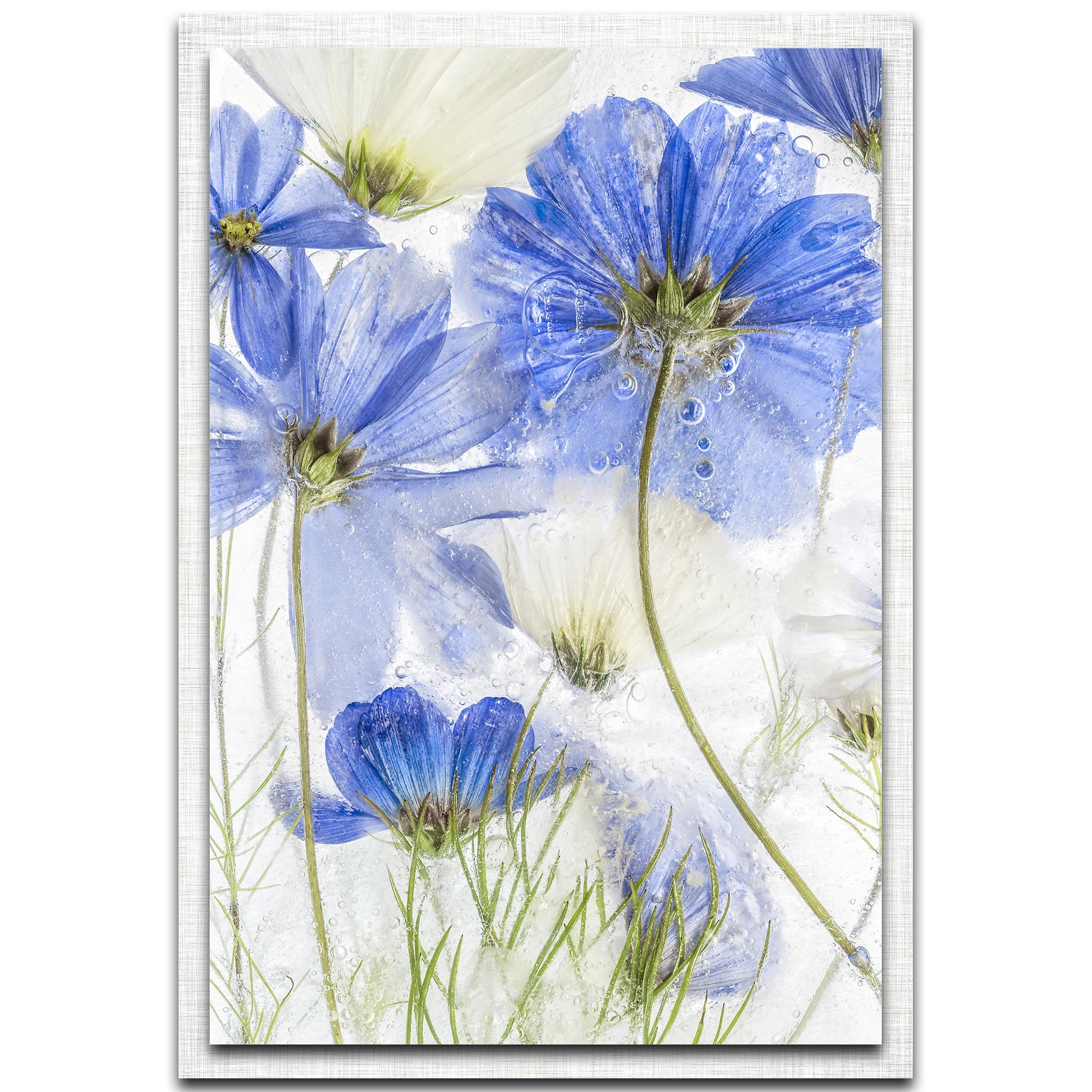 Mandy Disher 'Cosmos Blue' 22in x 32in Modern Farmhouse Floral on Metal