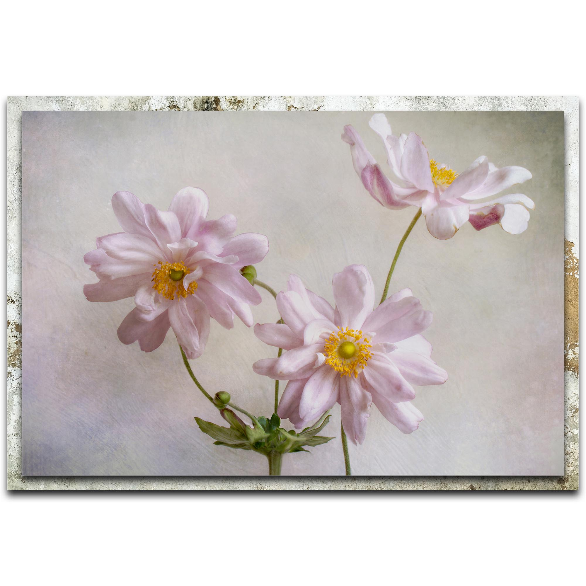 Mandy Disher 'Anemones' 32in x 22in Modern Farmhouse Floral on Metal