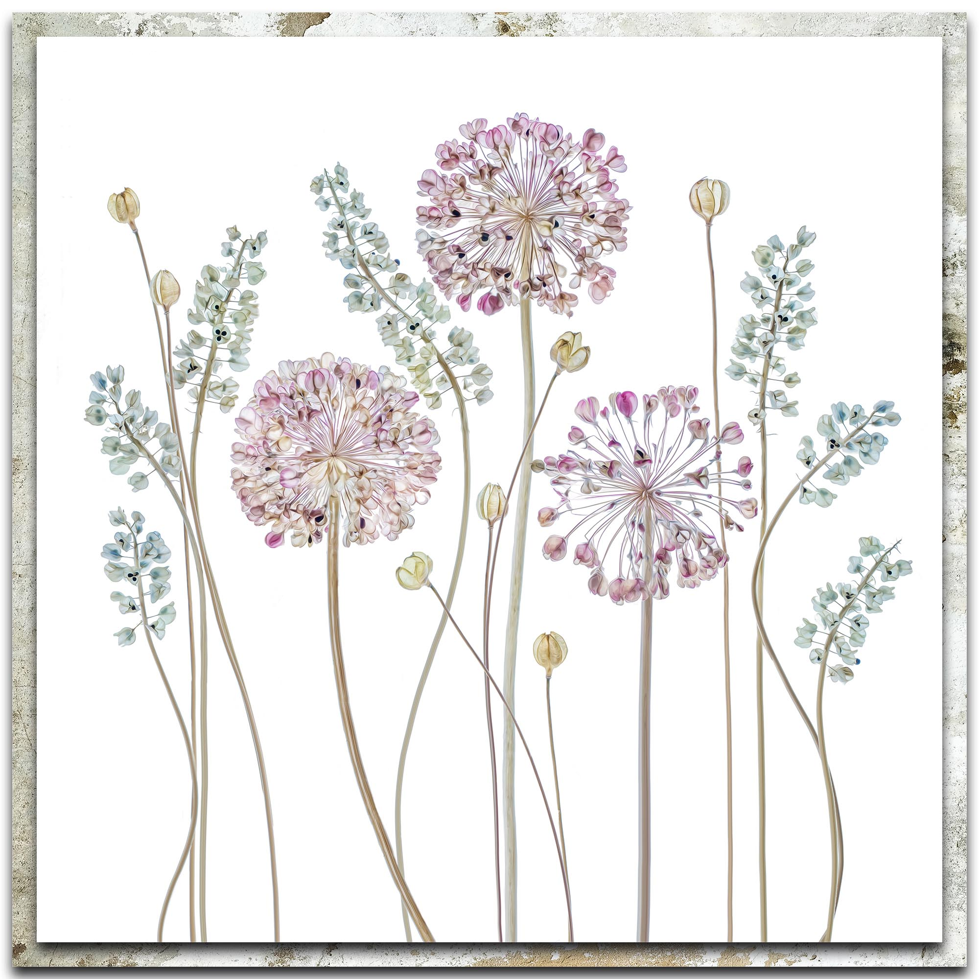 Mandy Disher 'Allium' 22in x 22in Modern Farmhouse Floral on Metal