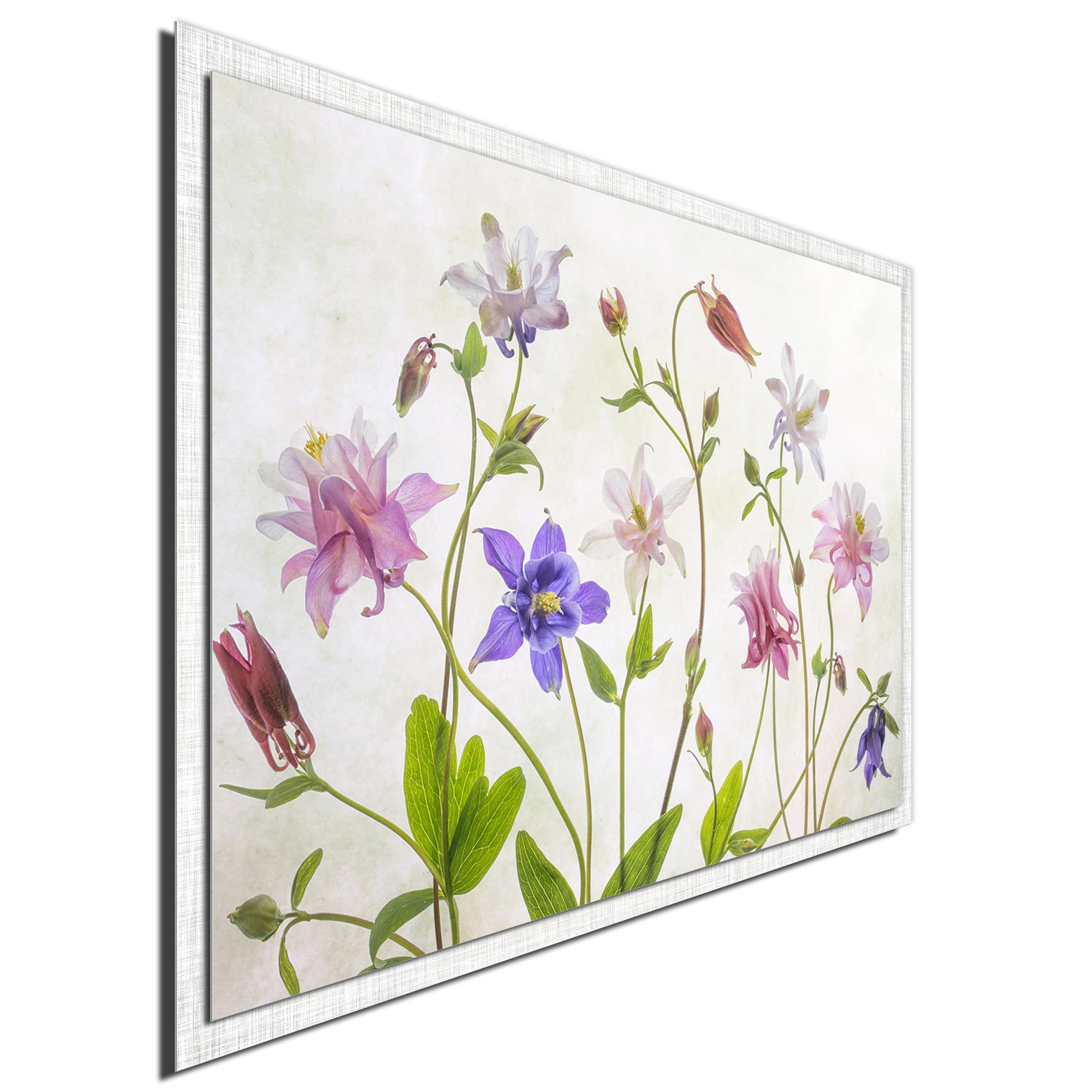 Columbine by Mandy Disher - Modern Farmhouse Floral on Metal - Image 2