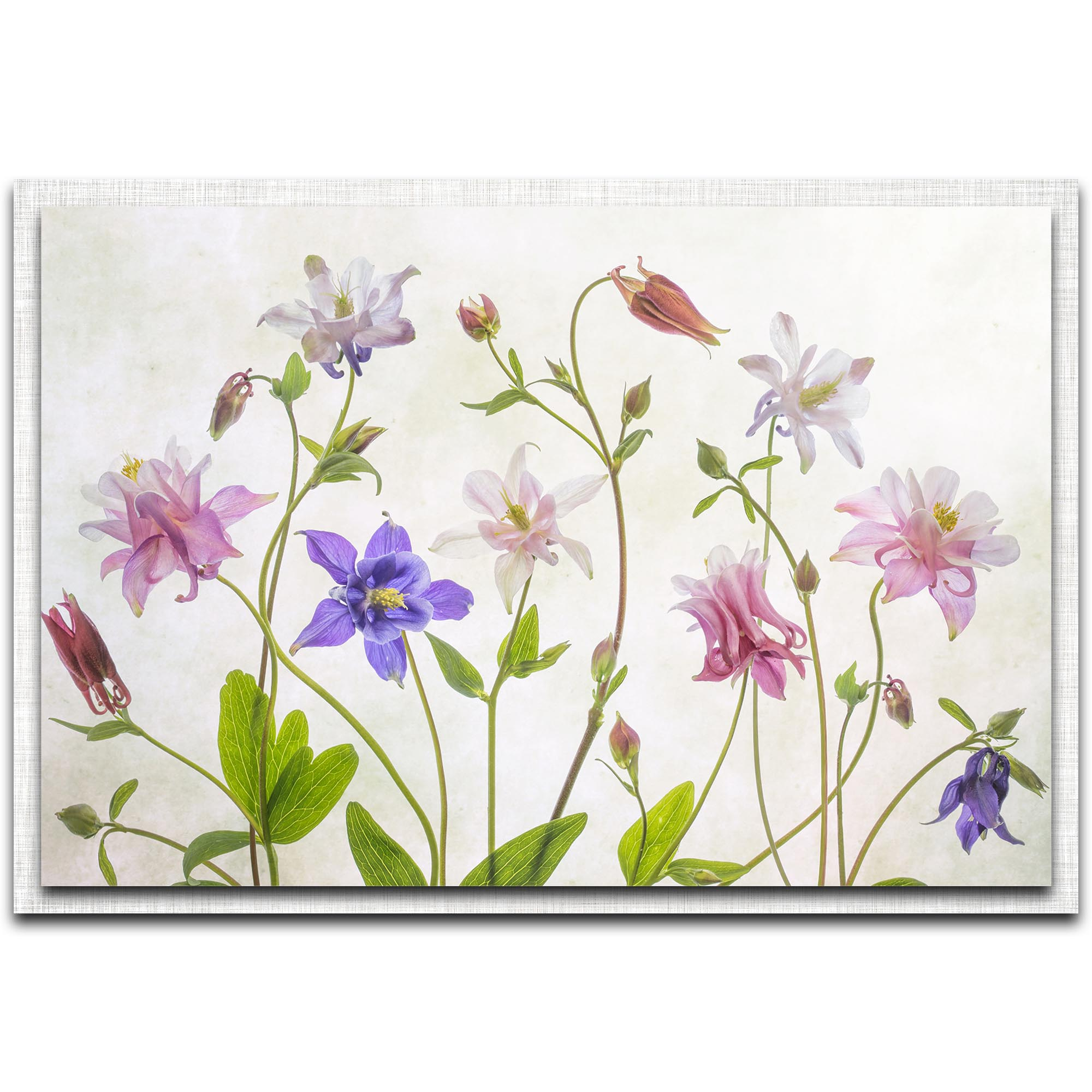 Mandy Disher 'Columbine' 32in x 22in Modern Farmhouse Floral on Metal