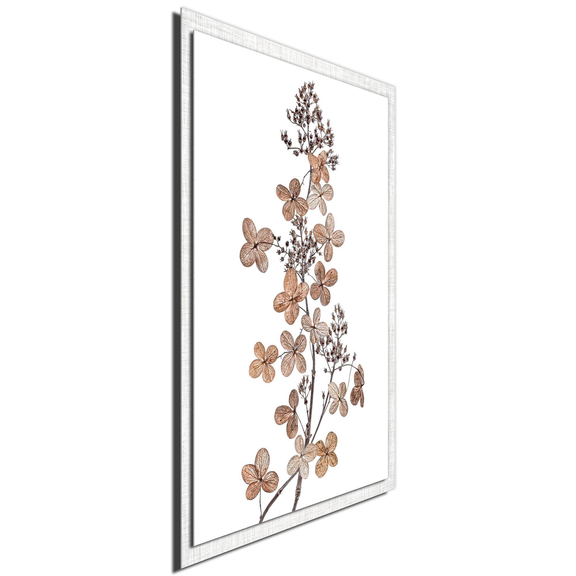 Hydrangea Paniculata by Mandy Disher - Modern Farmhouse Floral on Metal - Image 2