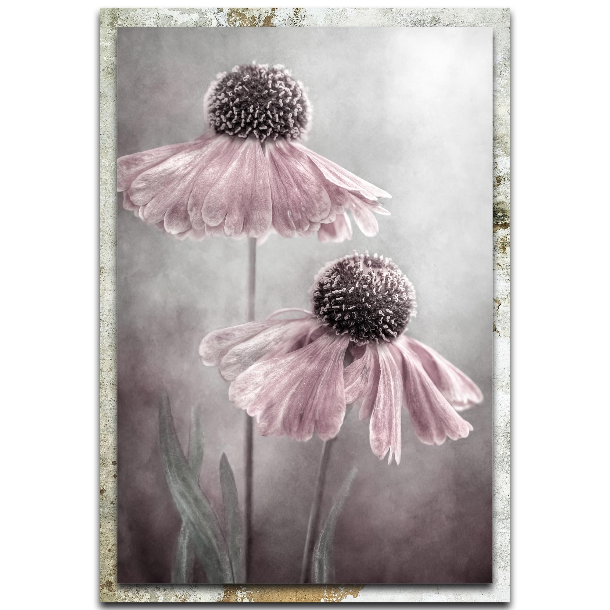 Mandy Disher 'Duet' 22in x 32in Modern Farmhouse Floral on Metal
