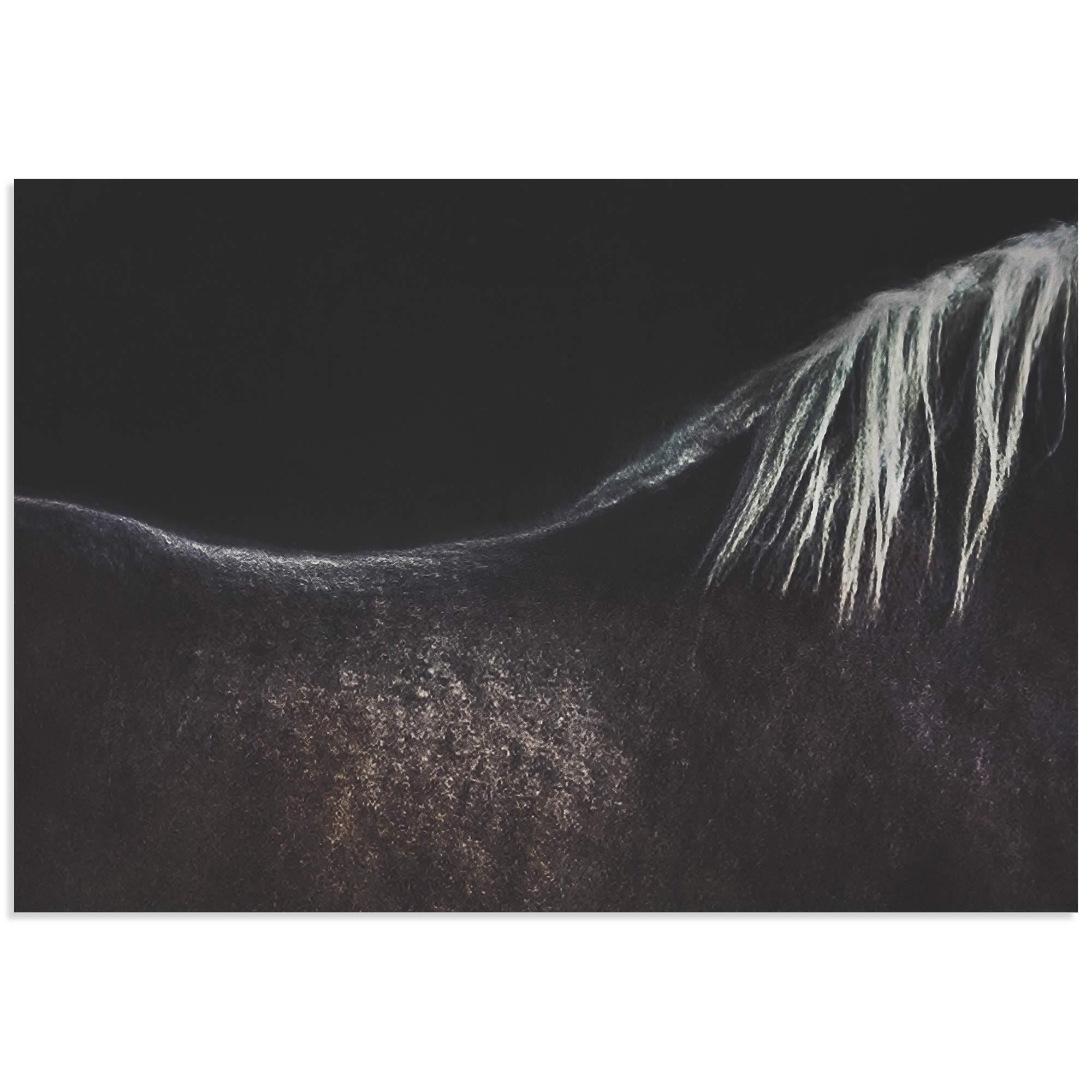 Naked Horse by Piet Flour - Horse Wall Art on Metal or Acrylic