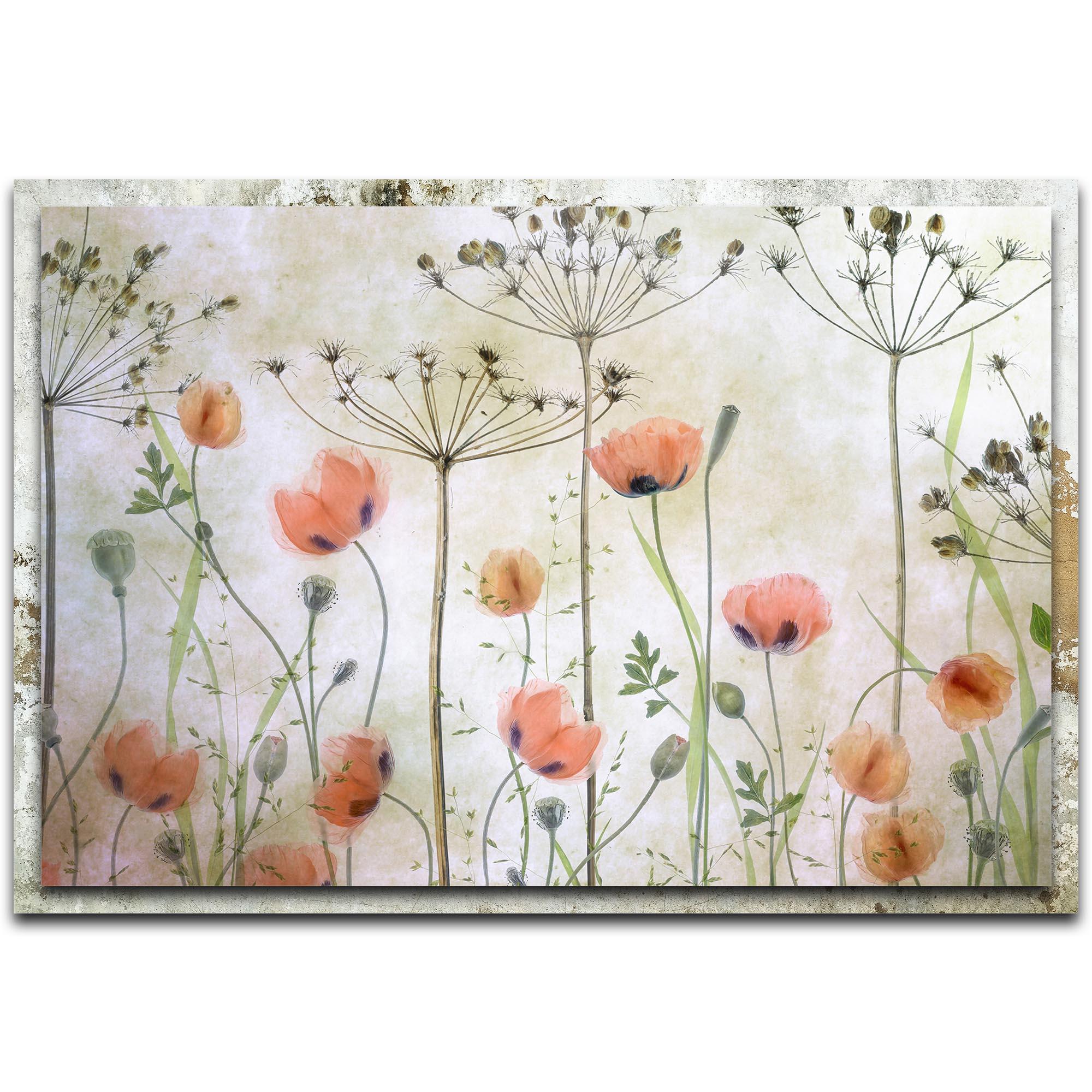 Mandy Disher 'Poppy Meadow' 32in x 22in Modern Farmhouse Floral on Metal