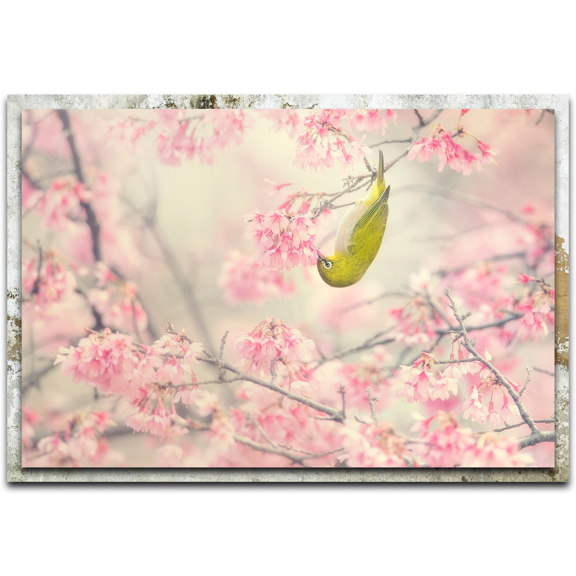Takashi Suzuki 'Cherry Blossom Color' 32in x 22in Modern Farmhouse Floral on Metal