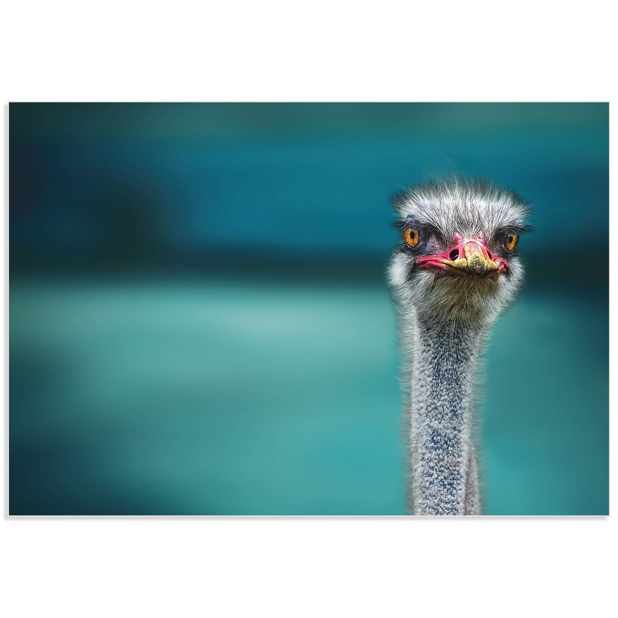 Ostrich by Piet Flour - Ostrich Wall Art on Metal or Acrylic - Alternate View 2