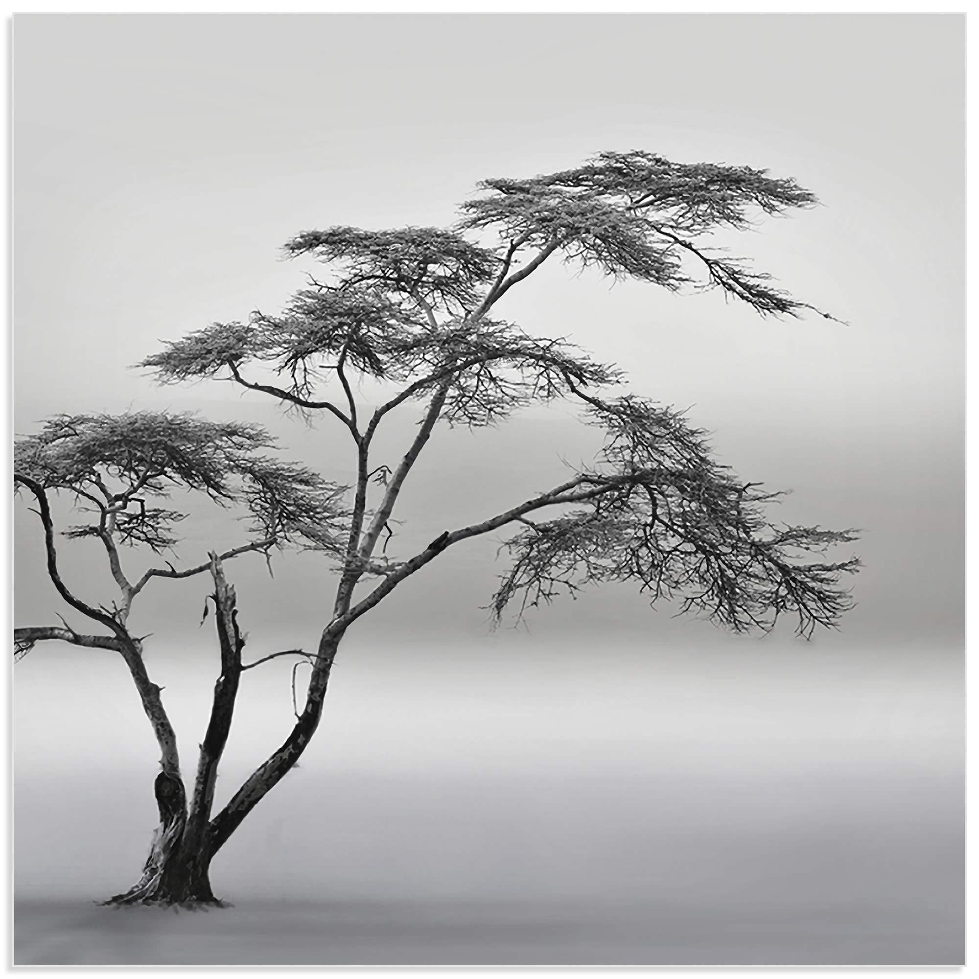 A Very Long Story by Piet Flour - Minimalist Tree Art on Metal or Acrylic - Alternate View 2