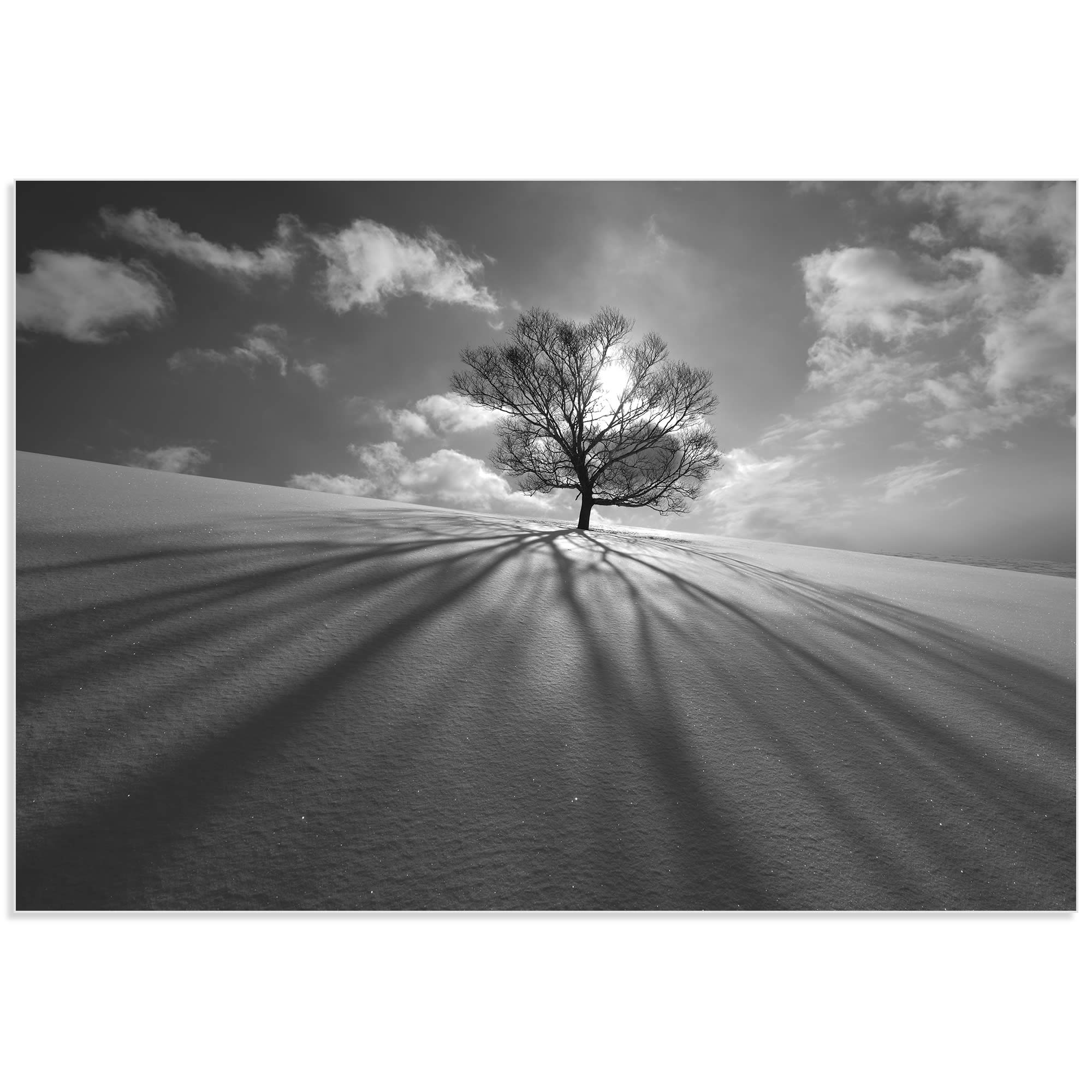 Tree Shadow by Kengo Shibutani - Dramatic Photography on Metal or Acrylic - Alternate View 2