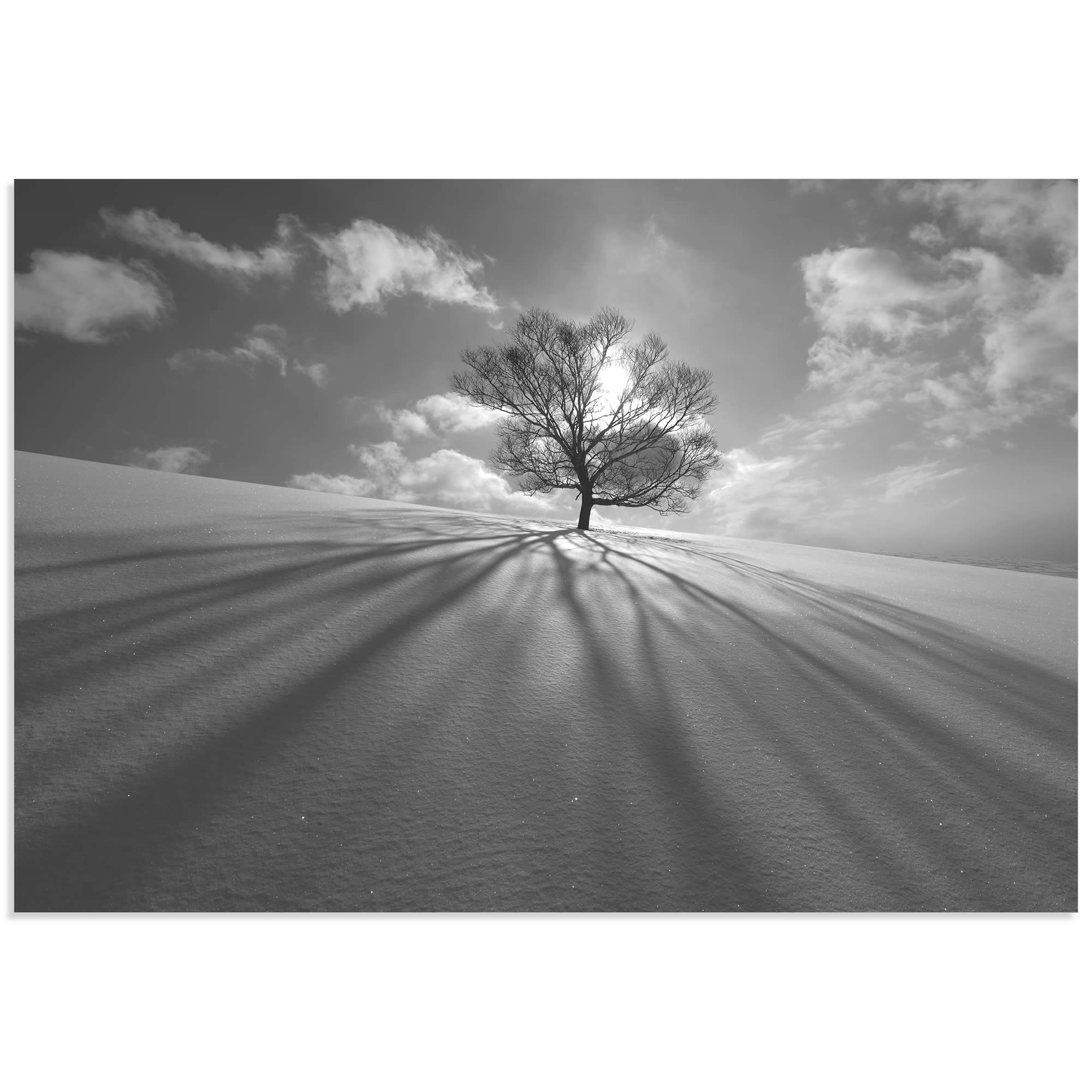 Tree Shadow by Kengo Shibutani - Dramatic Photography on Metal or Acrylic
