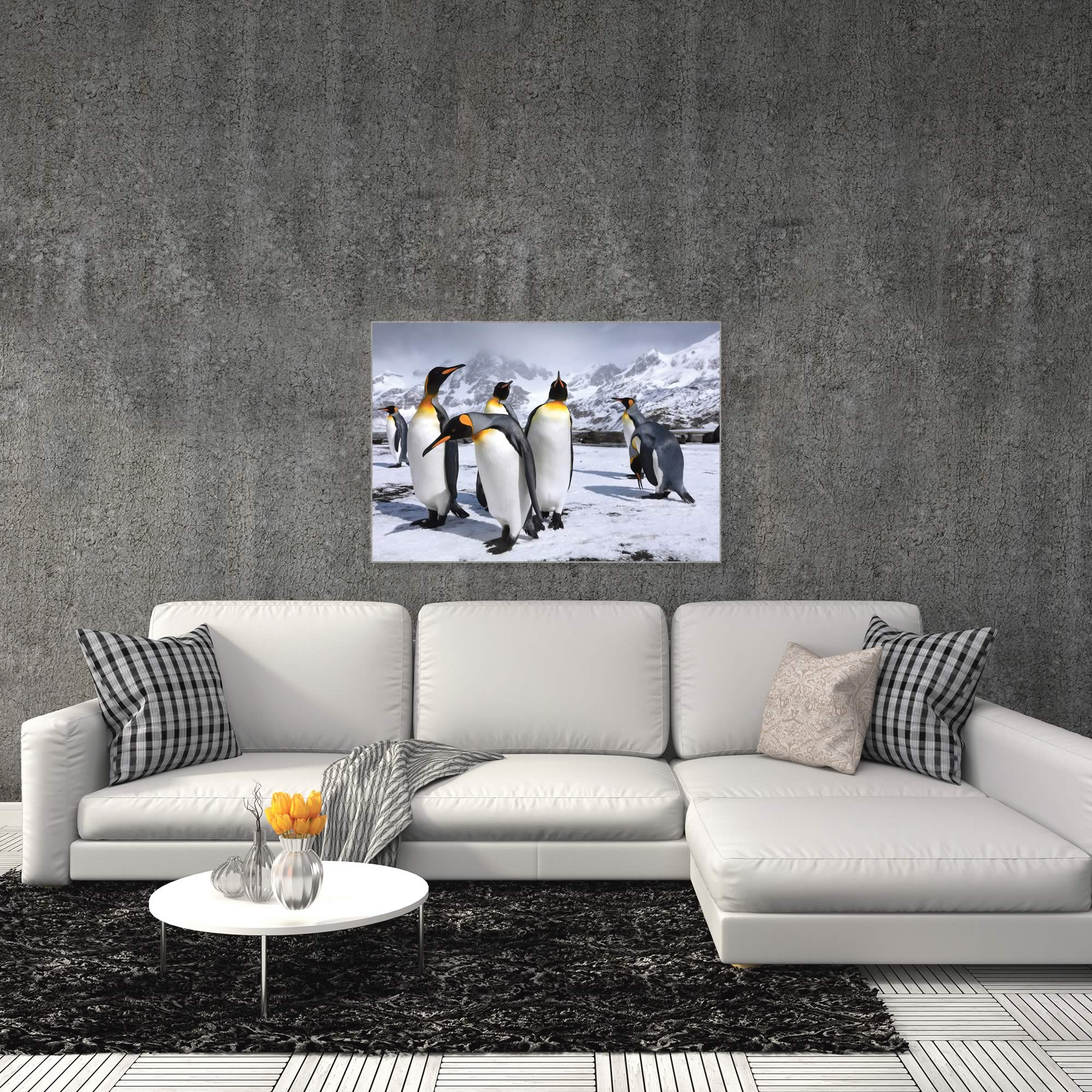 King Penguins at the Bay by Steph Oli - Penguin Wall Art on Metal or Acrylic - Alternate View 3