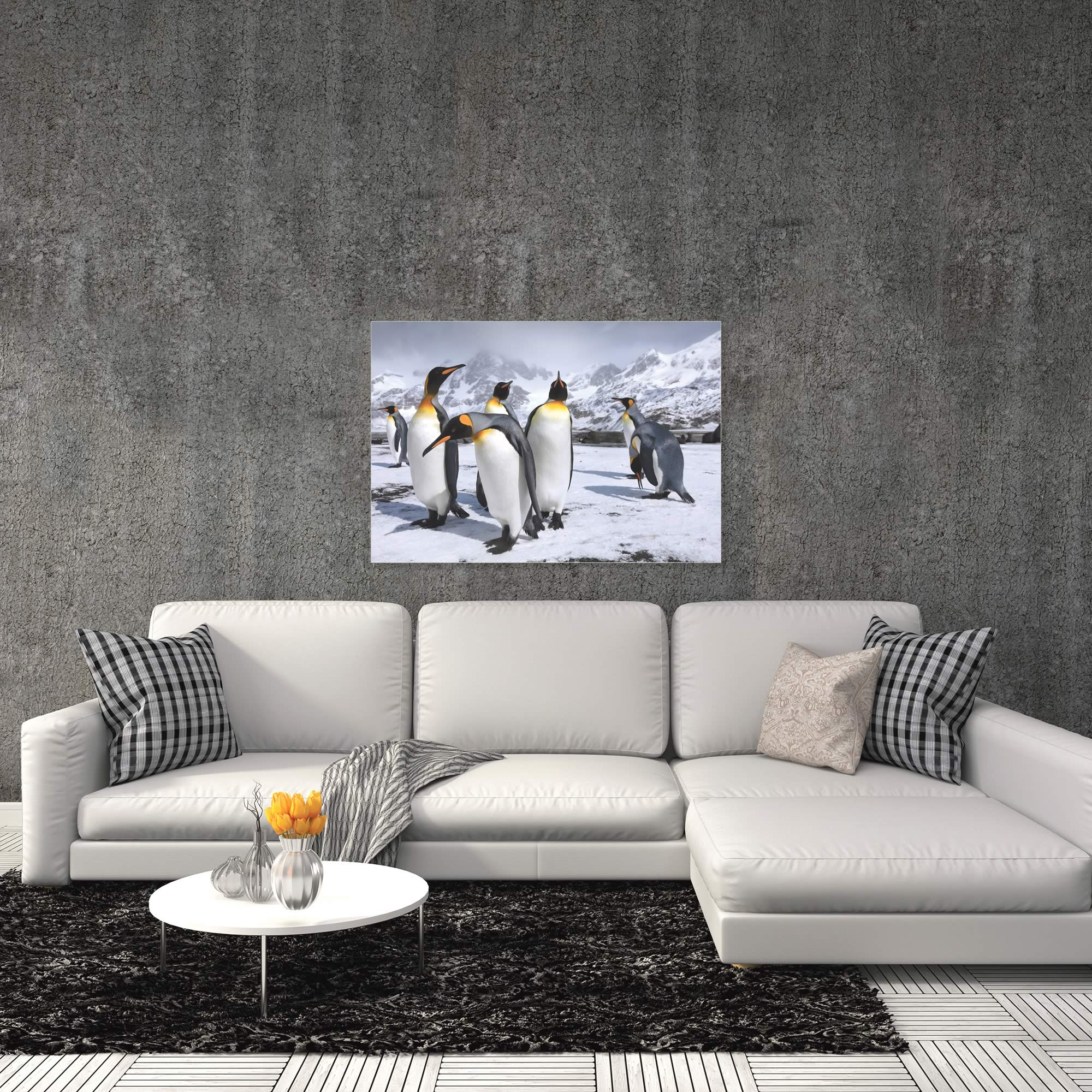 King Penguins at the Bay by Steph Oli - Penguin Wall Art on Metal or Acrylic - Alternate View 1