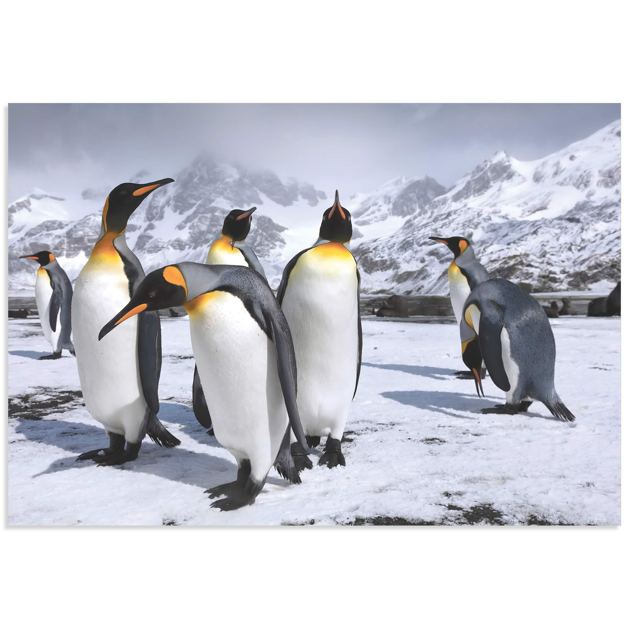 King Penguins at the Bay by Steph Oli - Penguin Wall Art on Metal or Acrylic