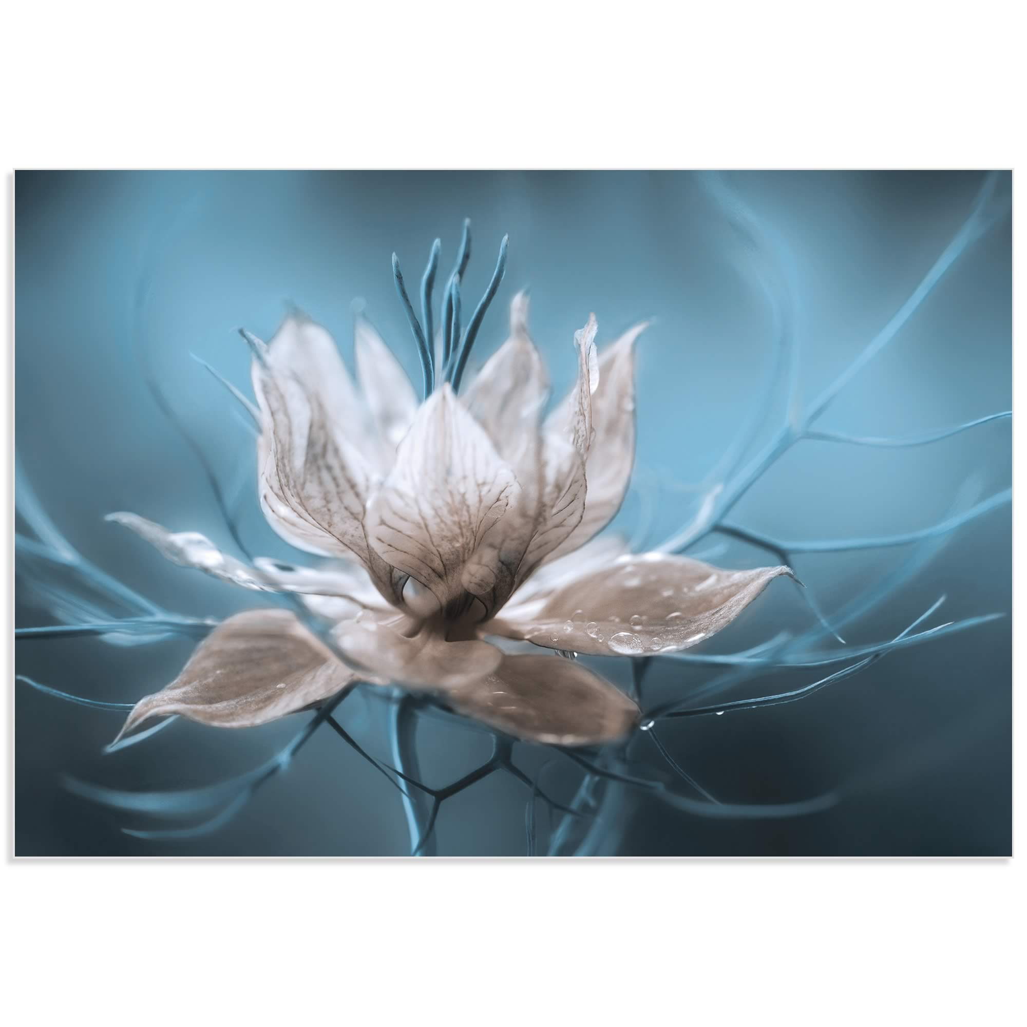 Ice Flower by Mandy Disher - Frozen Flower Image on Metal or Acrylic - Alternate View 2