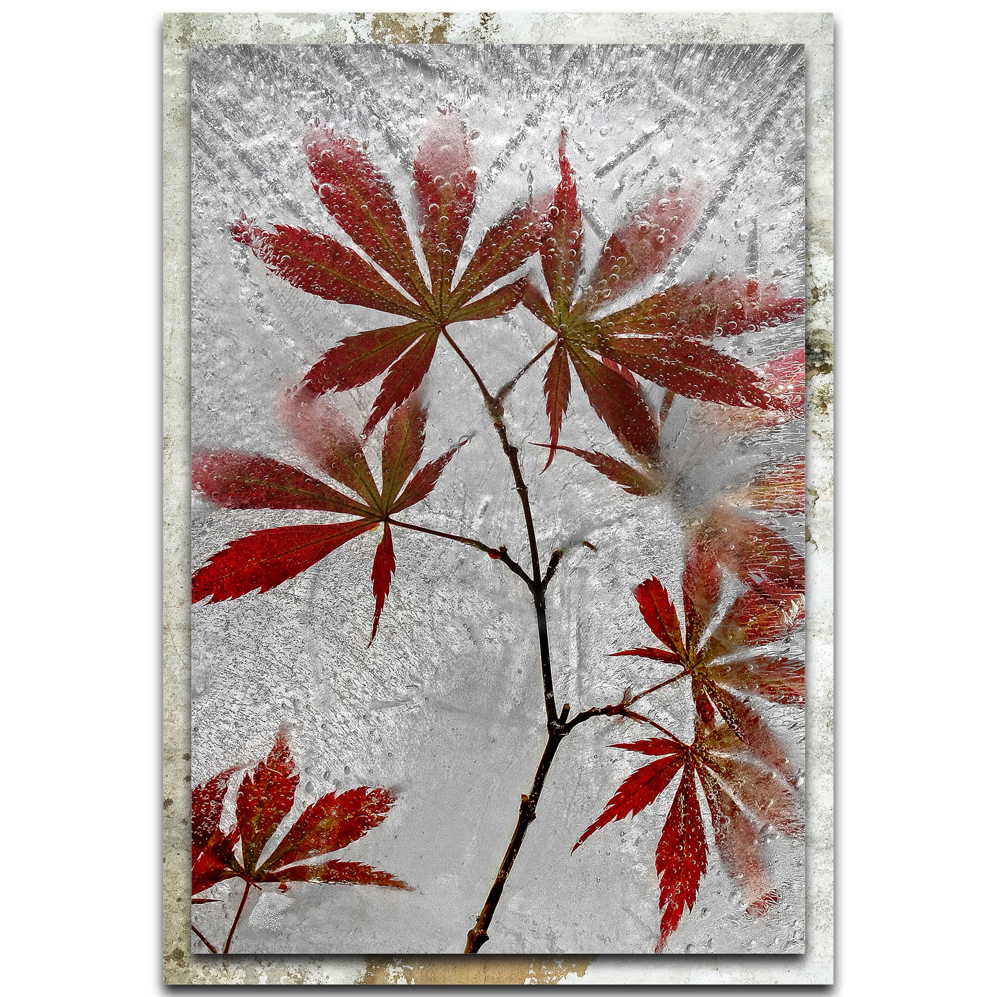 Secundino Losada 'Red Maple' 22in x 32in Modern Farmhouse Floral on Metal