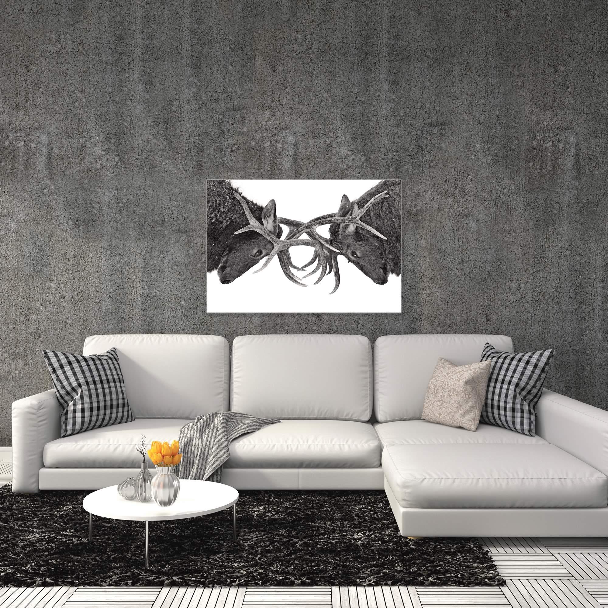 Antler to Antler by Jim Cumming - Deer Antlers Art on Metal or Acrylic - Alternate View 3
