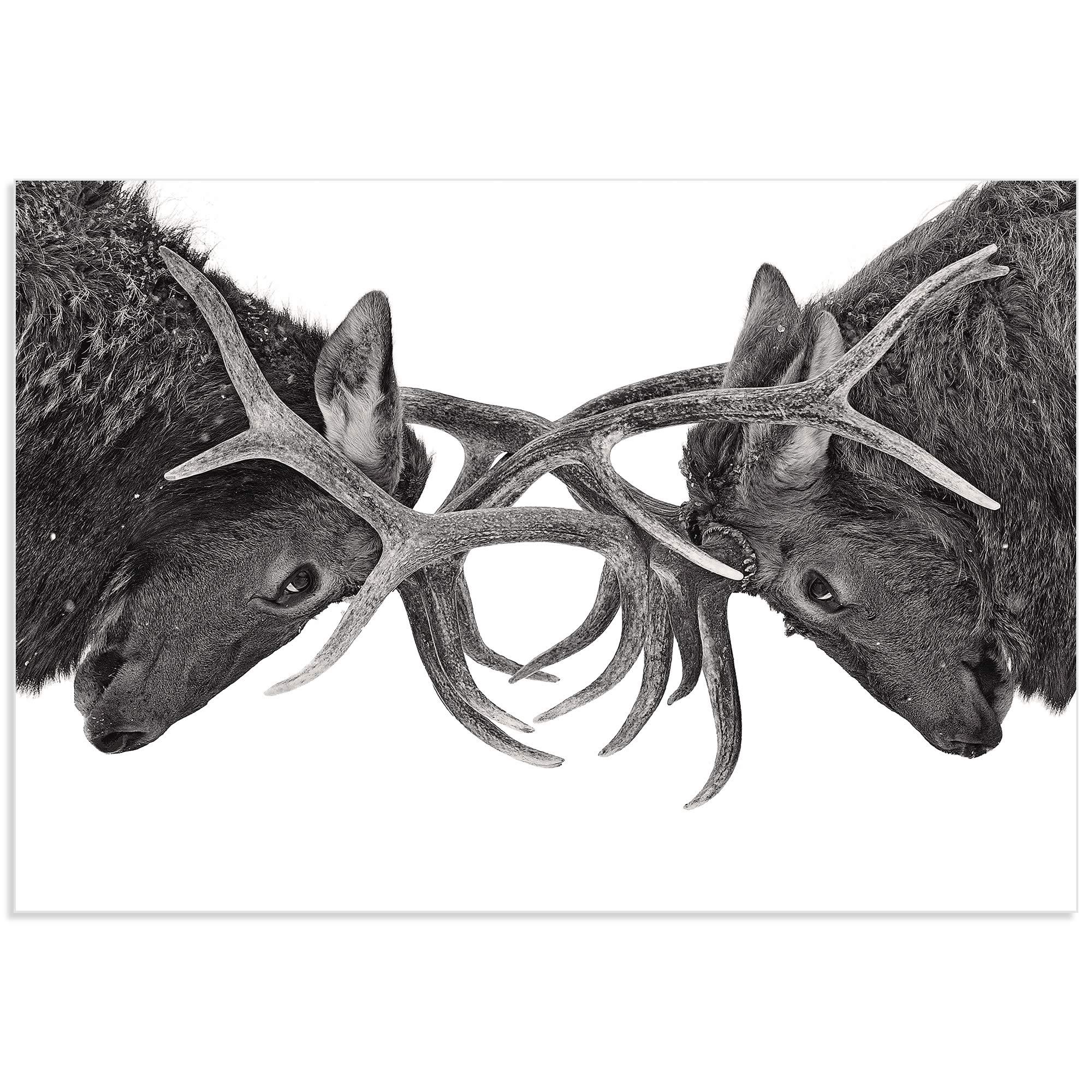 Antler to Antler by Jim Cumming - Deer Antlers Art on Metal or Acrylic - Alternate View 2