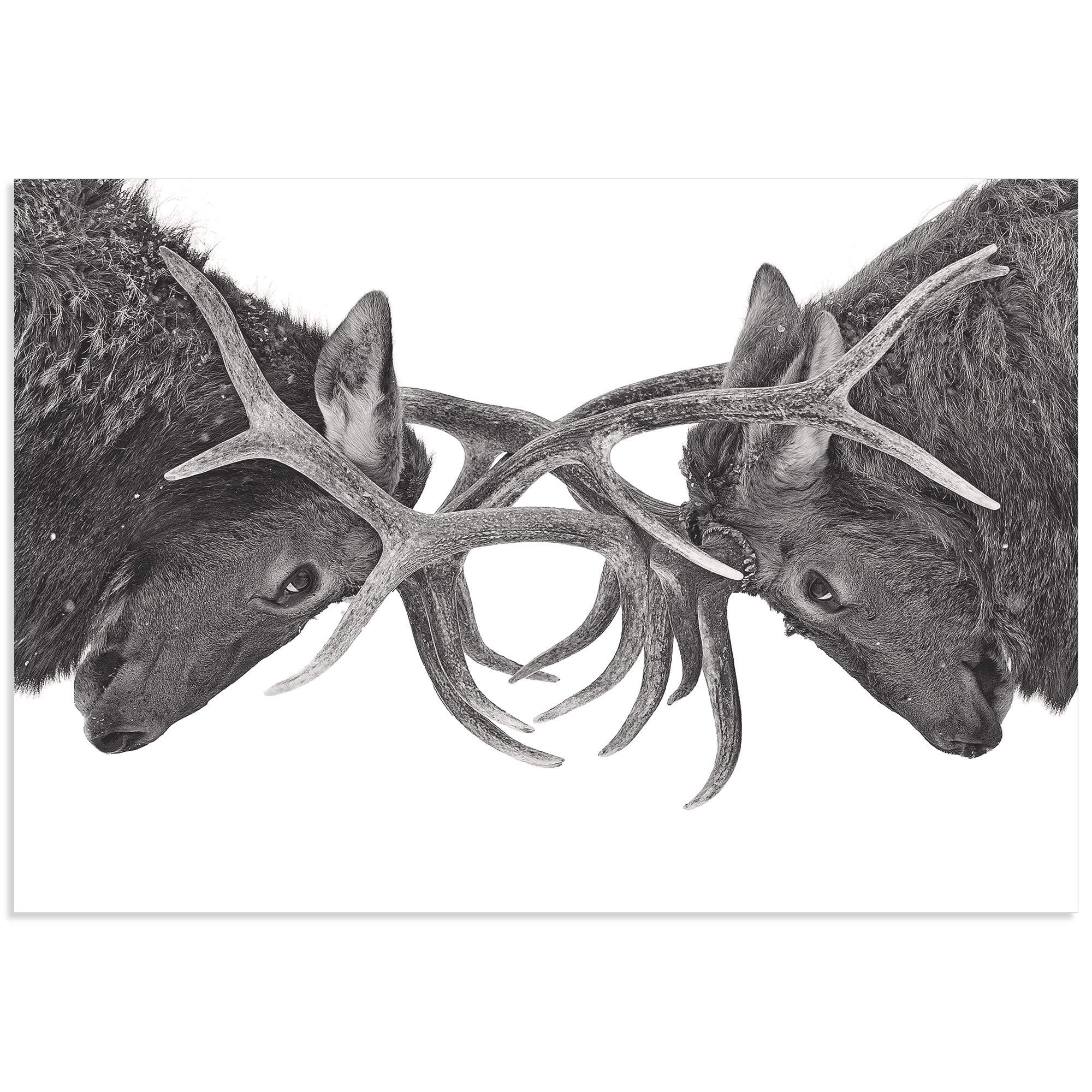Antler to Antler by Jim Cumming - Deer Antlers Art on Metal or Acrylic