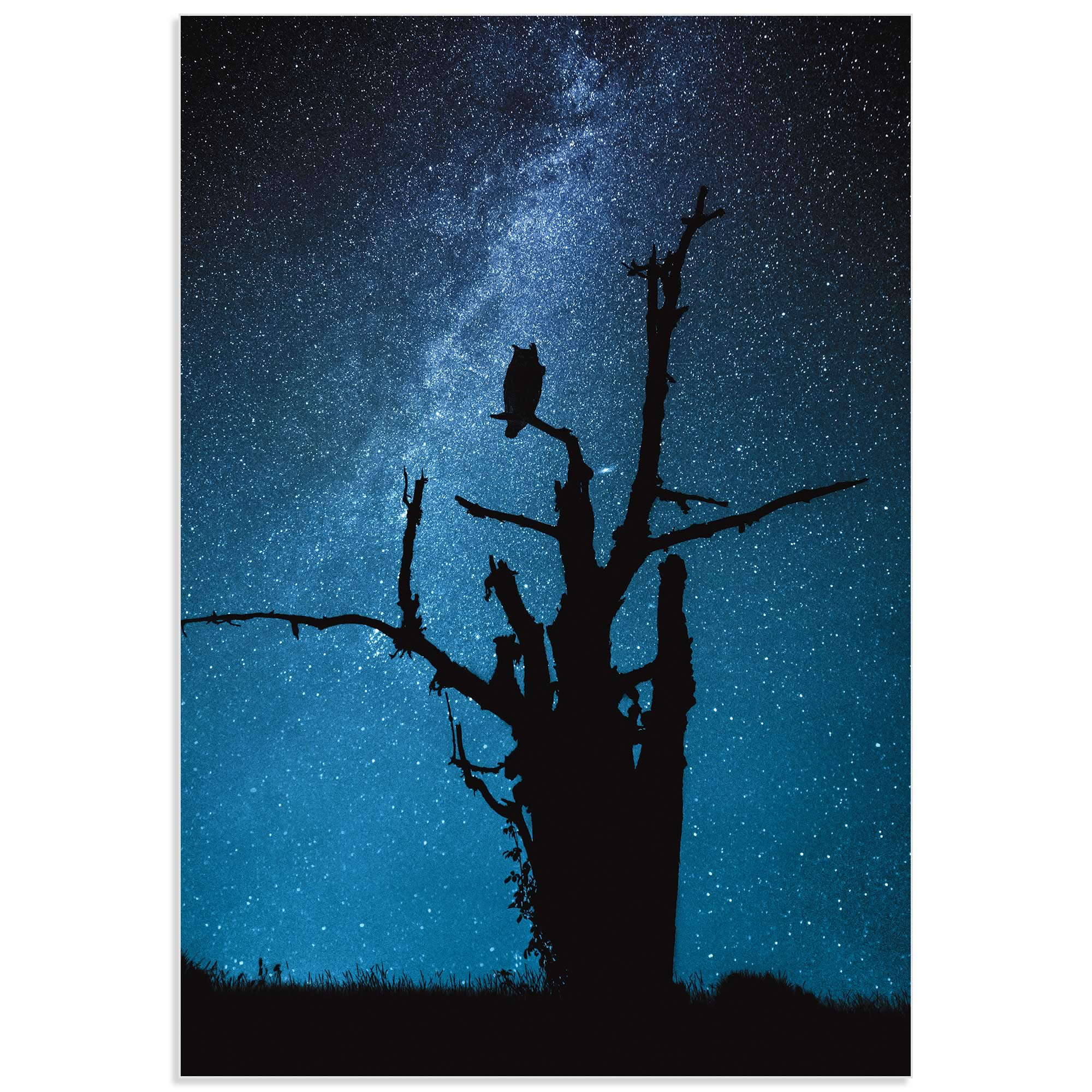 Alone in the Dark by Manu Allicot - Owl Wall Art on Metal or Acrylic - Alternate View 2